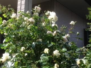 晴れの日の白色.JPG